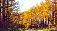 【旅頃】網走 秋の旬祭り