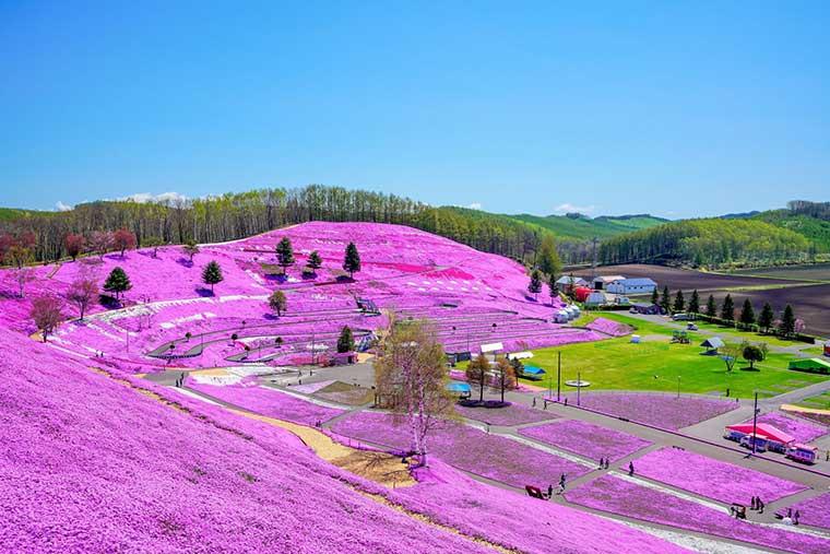 丘 の 上 に は 花畑