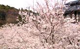 [リンク画像]中伊豆修善寺温泉 温泉や 神代の湯