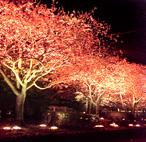 [画像]桜並木ライトアップ