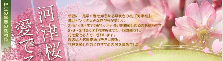 [画像]伊豆の早春の風物詩 河津桜を愛でる旅