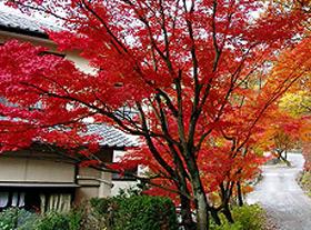 山神温泉 湯乃元館◆楽天トラベル