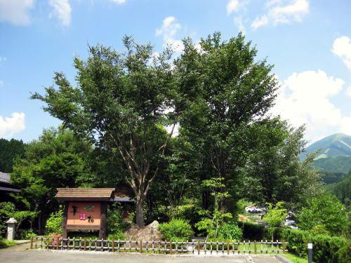 山川温泉 華柚(はなゆう)<露天風呂付きの客室のある宿>