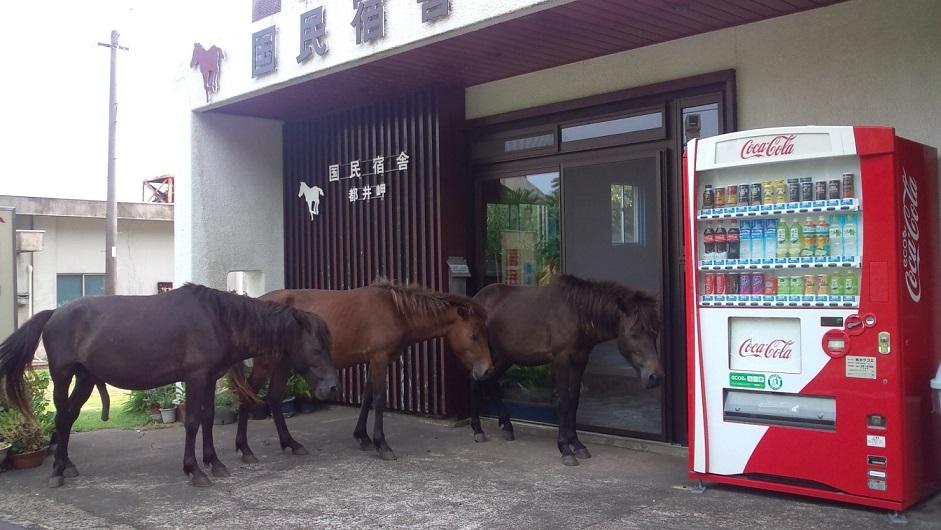 都井岬 国民宿舎◆楽天トラベル