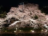 【静岡県】くつろぎ日和 伊東遊季亭